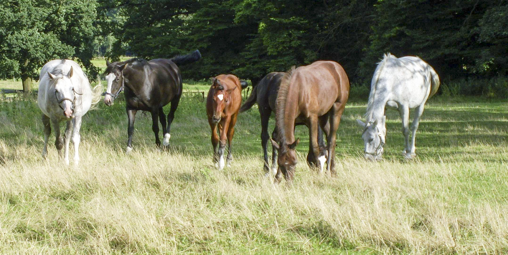 pferde kaufen ebay
